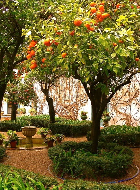 Bitter Orange Garden - Seville, Spain--I miss the orange trees in Spain....
