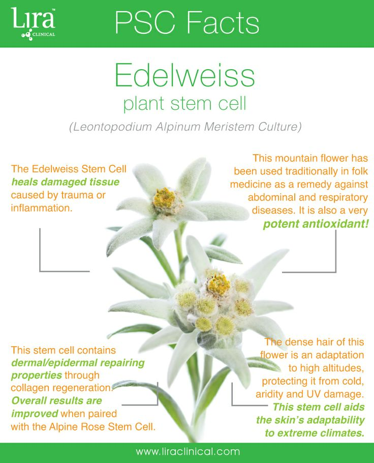 Burr it's cold out there! Edelweiss flowers thrive in cold climates and mountainous regions. The Edelweiss PSC contains some truly amazing properties!