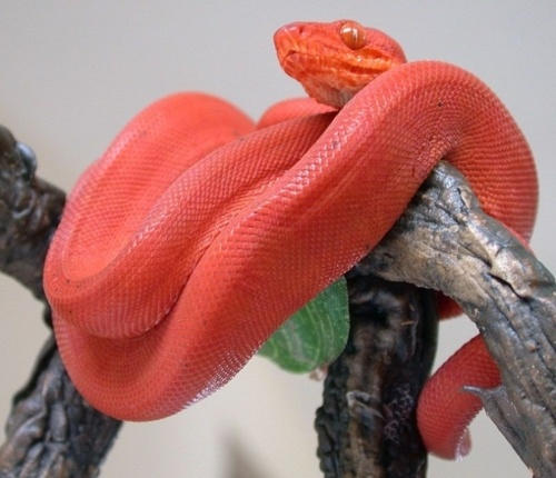 17 Best Ideas About Colorful Snakes On Pinterest