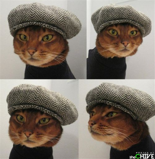 ciaoHats, Animal Pics, Hipster Cat, Cat Fashion, Newsboy Cap, Funny, Baby Animal, Crazy Cat, Kitty