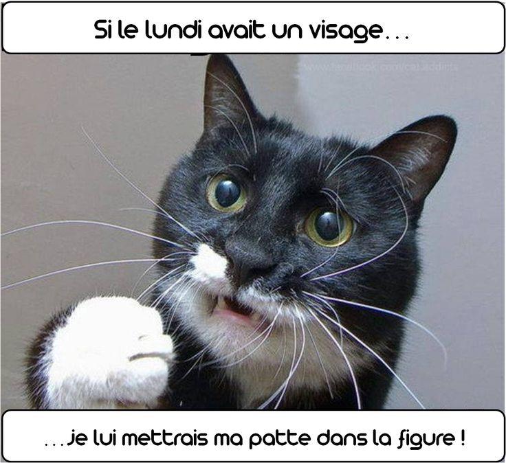 bon #lundi à tous :) de toute la part de l'équipe #zoomalia votre #animalerie en ligne www.zoomalia.com