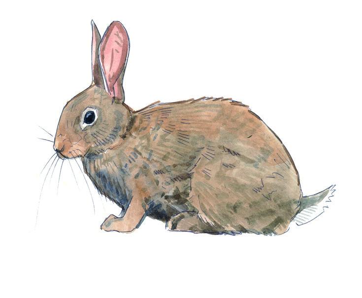 Les 20 meilleures id es de la cat gorie lapin de garenne - Cuisiner un lapin de garenne ...