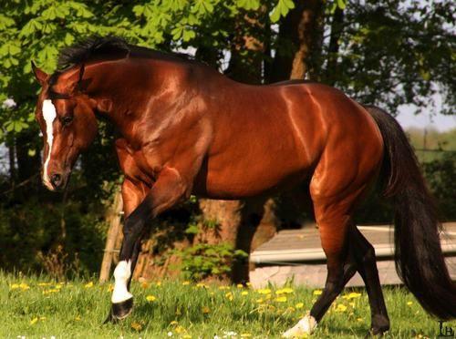 bay horse show - photo #26