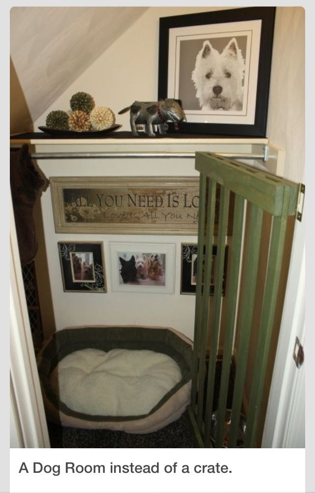 Turn A Closet Or Small Space Into A Dog Room