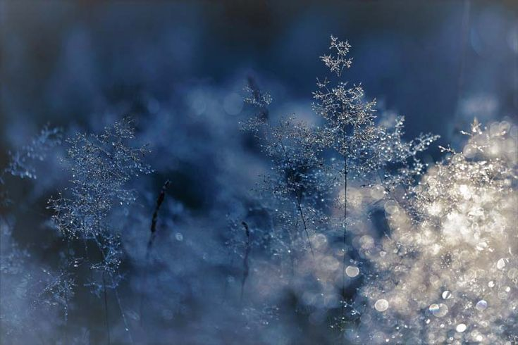 The winter season is generally less popular with photographers, Yet, the arrival of the first snowflakes is often a trigger for photographing the snow.