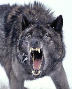 Image result for teeth wolf all the better to eat you with my dear