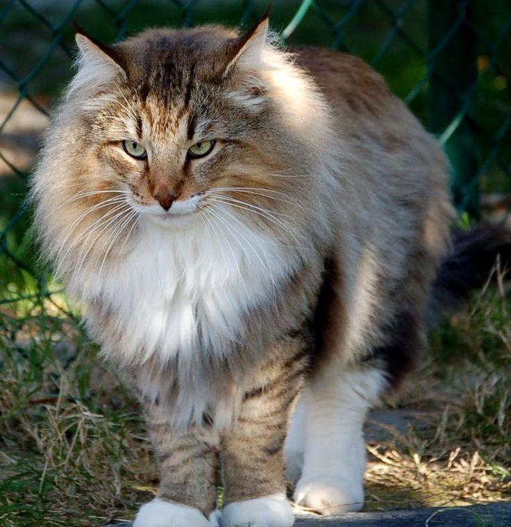 Gatos machos de Leoncio - Rik Hulst - Álbumes web de Picasa
