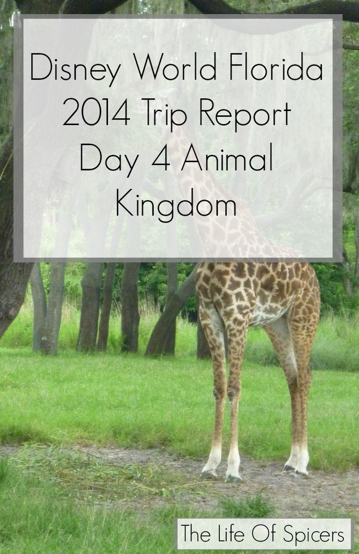 Disney World Florida 2014 Holiday Day 4 Animal Kingdom - The Life Of Spicers