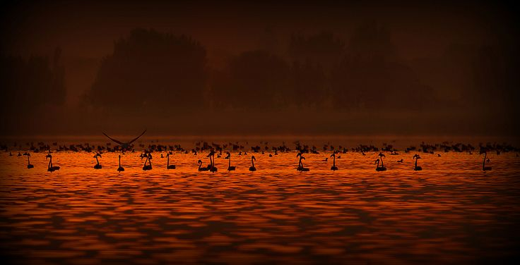 Flamingos | by Wasif Yaqeen Flickr