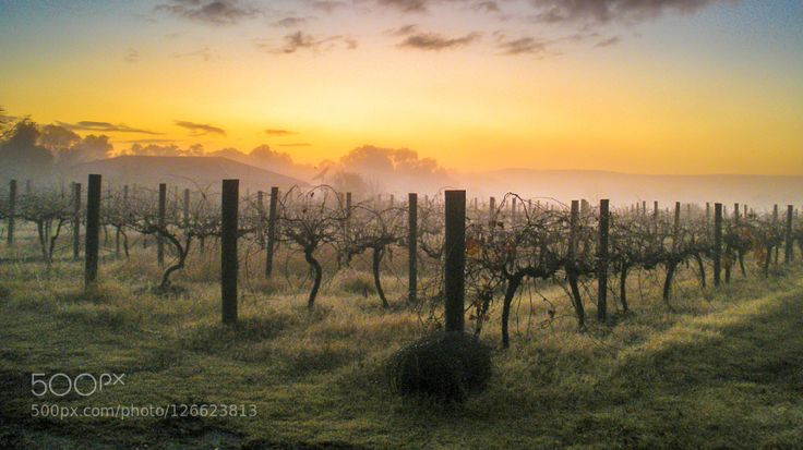 Chilly Start - Pinned by Mak Khalaf Winter Sunrise over a dormant vineyard Swan Valley Perth Western Australia Travel AspectAustraliaFirst lightHorizontalNATURE SUBJECTSOrientationPerthPhotography StylesSeasonsSunriseSwan ValleyTimeVineyardWide AngleWinterdawndaybreakfirst lightsun up by Ballantyne