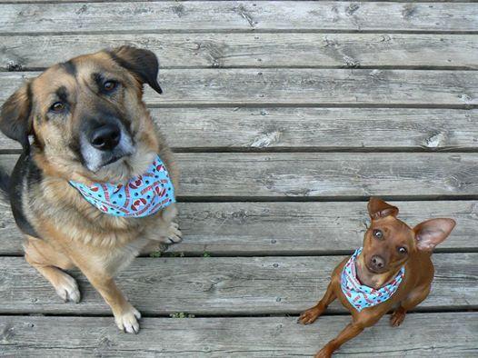 Winnie and Mia wearing their Canada Day bandanas! It's also Winnie's birthday, she was four on July 1st, 2014!