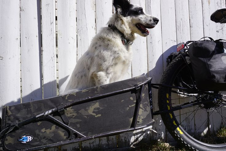 Bike trailer for dog, Bikepacking with your dog, dogpacking