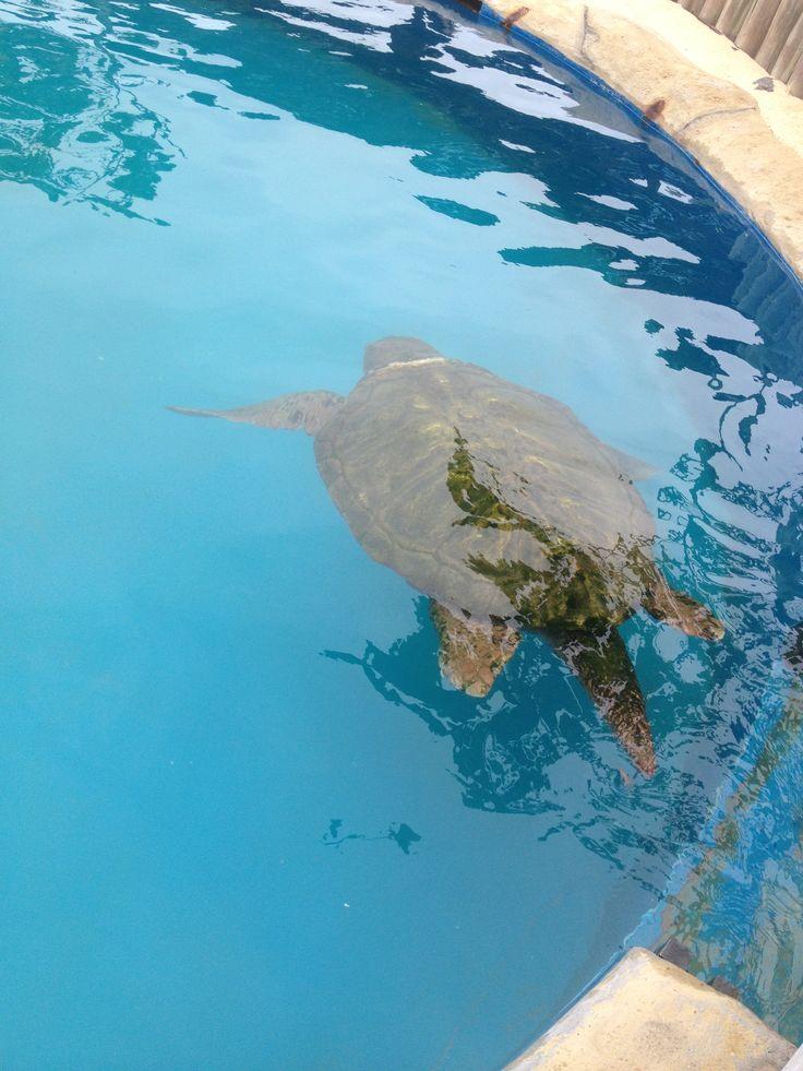 tanque das tartaruga