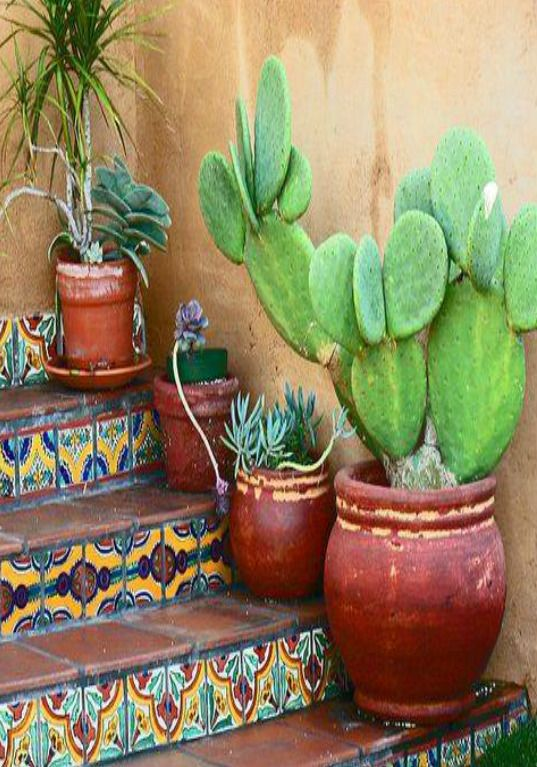 Cactus In Terracota Pots Going Up The Mexican Design Steps
