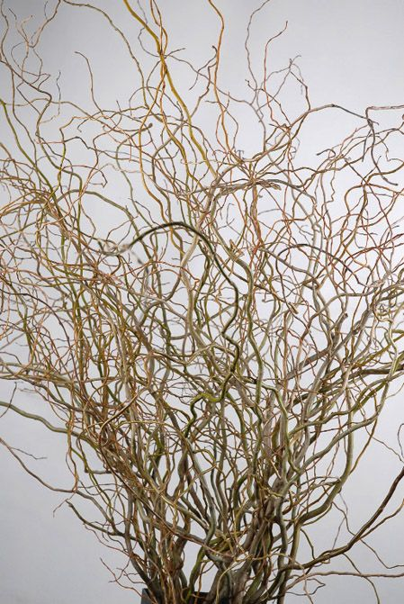 Birch Branches &  Curly Willow Branches