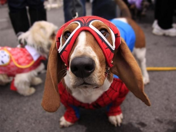 This Spider Dog will solve your all problems