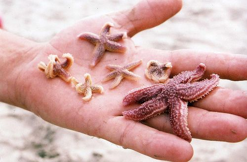 So cute! I love marine biology. From flickr user meaghdearsley #starfish