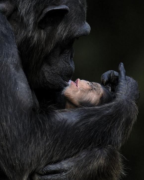 animals are like humans, they have feelings, they take care of each other and love each other. DD
