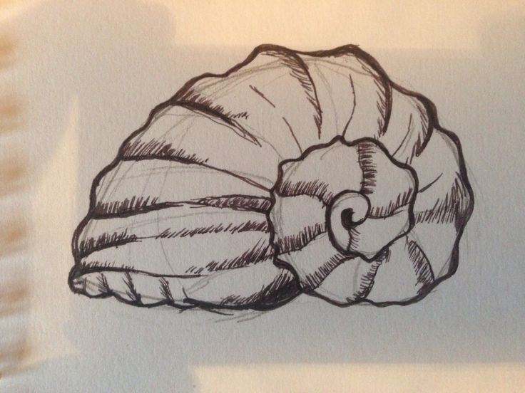Shell sketch. Drawing of shell. Line drawing. | Next ...