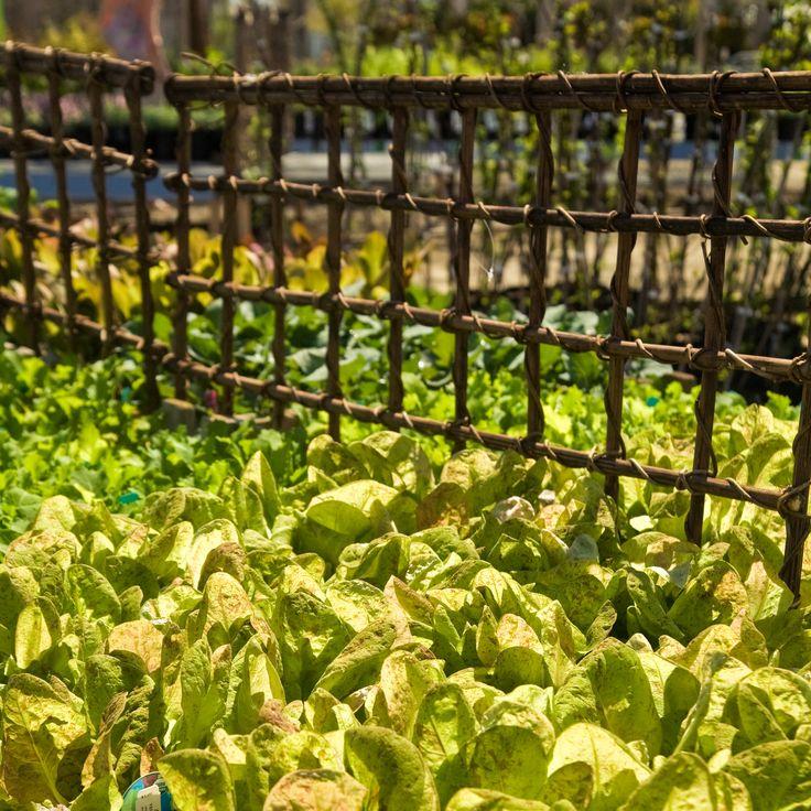 135 Best Trellises Images On Pinterest | Garden Trellis, Gardening And  Garden Ideas