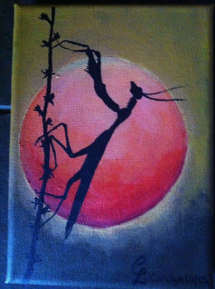 Mantis at sunset by Carolyn Lopes