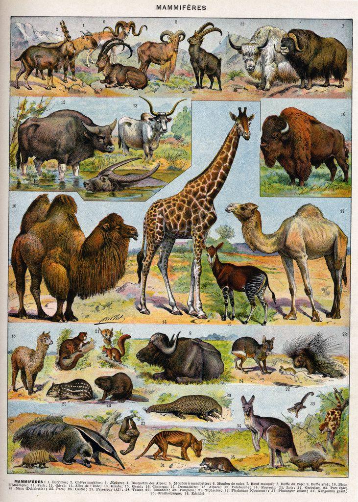 Tout Les Animaux D Afrique : animaux, afrique, Toutes, Tailles, Mammifères-couleurs, Flickr, Partage, Photos, Illustrations, Animalières,, Animales,, Animaux, Africains