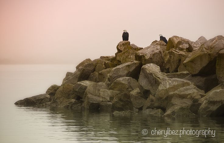 Eagles on the Rocks - A foggy morning provides the backdrop for this pair of Bald Eagles at the pier, White Rock, BC. ©cherylbez.photography