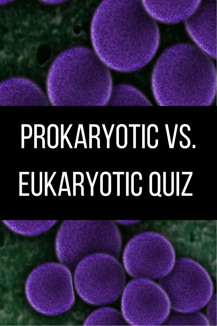 Prokaryotic Vs Eukaryotic Quiz Middle School Science Pinterest Cells A Quick One Page Covering The Differences Between And Editable Version Answer Key Included