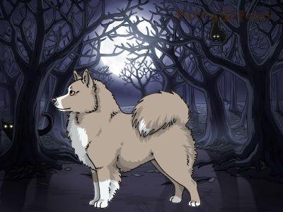 Furry Paws // WCH Kip's Nitrus [1.603] *BoB*'s Kennel