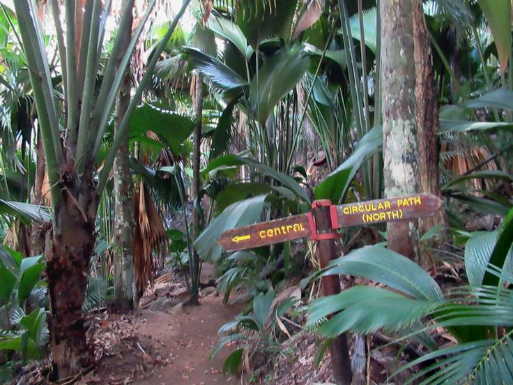 Hiking trails provide easy access to the Valee de Mai Nature Reserve on Praslin Island, Seychelles. The reserve`s famous coco-de-mer palms can live up to a thousand years and grow over 30 meters tall.