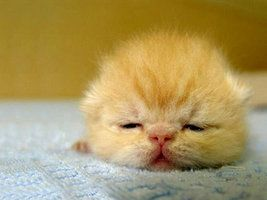 gato soñoliento por aloynna