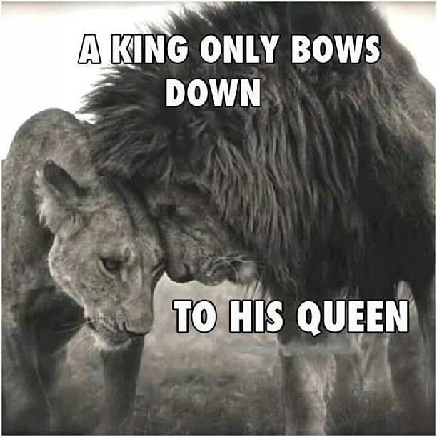 A king only bows down to his queenBig Cat, Queens, Nick Brandt, Beautiful, True Love, Lion Love, Lion King, Nickbrandt, Animal