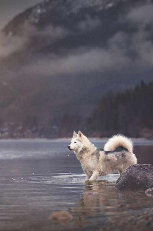 A Siberian husky in a picturesque landscape.