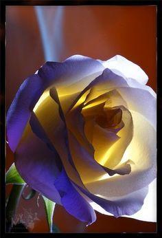 ☆ ¸.·'¯) ✿Pinterest Rose CR✿(¯`·.¸ ☆