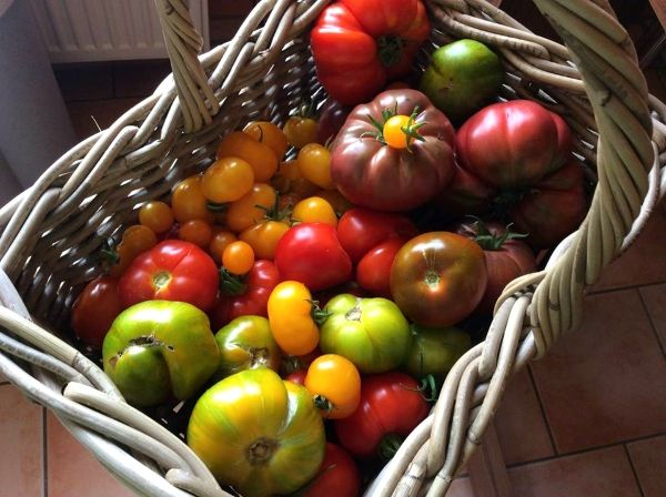 179 best tomaten tomatoes images on pinterest vegetable garden vegetables and veggies. Black Bedroom Furniture Sets. Home Design Ideas