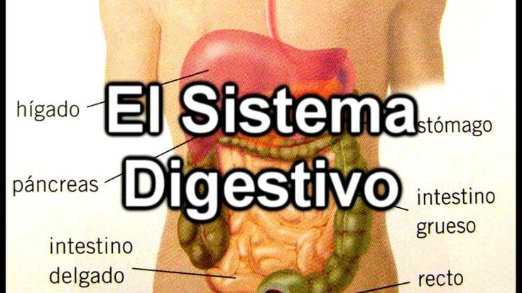 El Sistema Digestivo - Documental de Biología