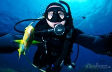 Passive interactions with marine life. Tips on how to enjoy sealife not to their detriment.