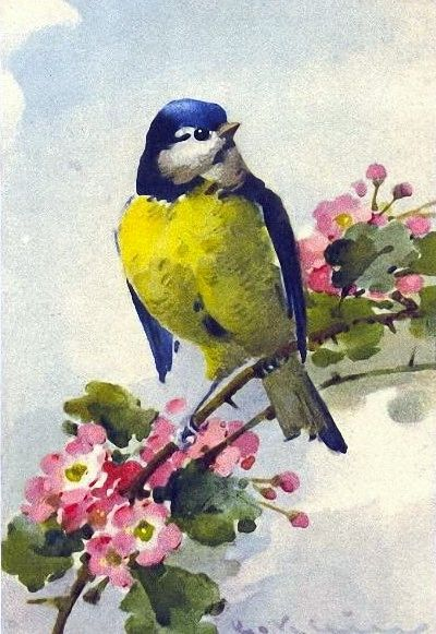 A vintage bird painting by the talented Catharina Klein (1861-1929), Berlin, Germany. Known for her paintings of flowers, Klein is a talented artist from the late nineteenth century and early twentieth century.