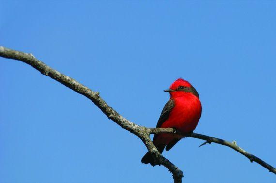 aves de los llanos orientales colombianos - Buscar con Google
