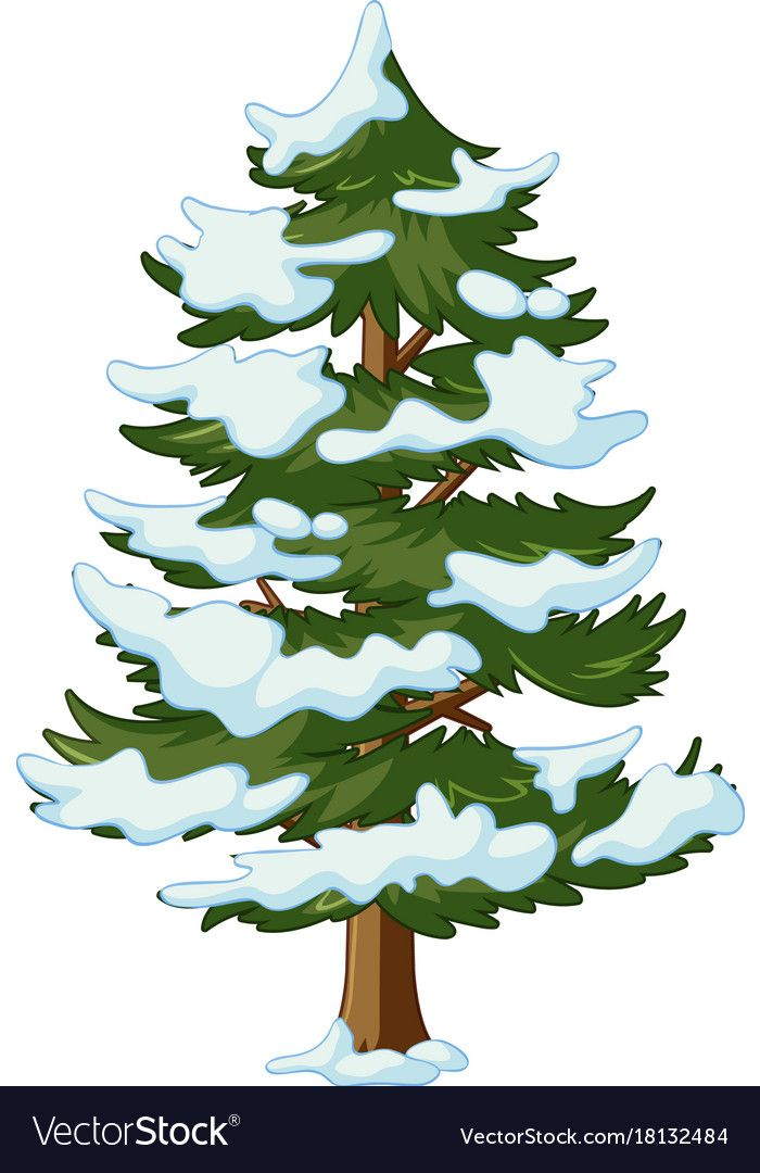 Pine Tree With Snow On It Vector Image On Vectorstock Tree Illustration Drawing Scenery Christmas Watercolor
