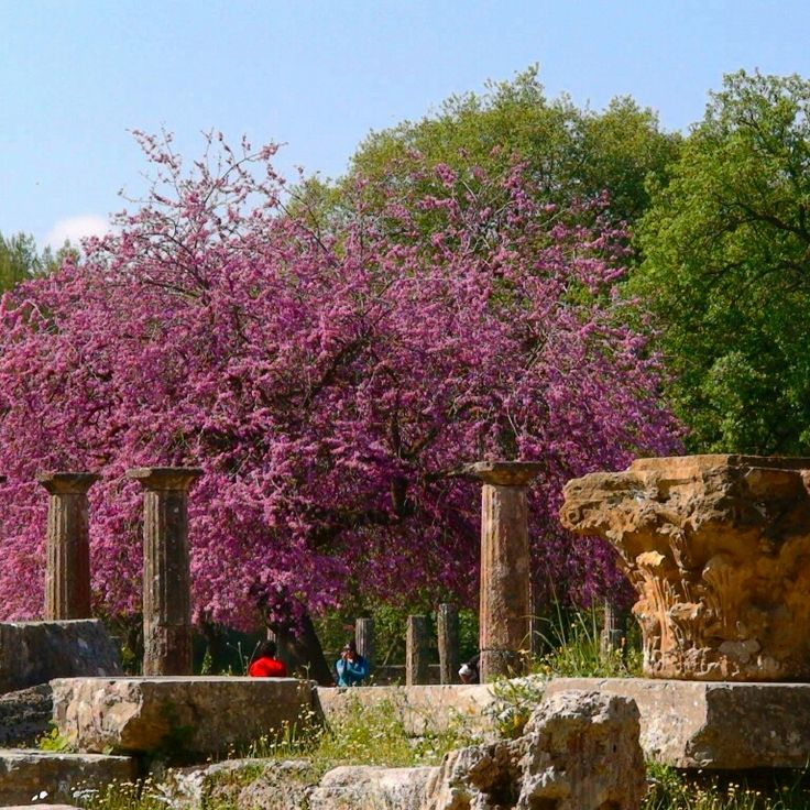 Palestra - ancient Olympia - Greece #greece #archaeology #tree #spring #flower #ancientolympia #trip #tourguide #privatetour #olympiatour #travel #palestra #olympicspirit #olympicflame #olympicgames #guidemeingreece #guidemeingreecetours #happy #olympiaguide #cruise #athlete #boxing  #wrestling #katakolo #architecture #art #life #enjoy