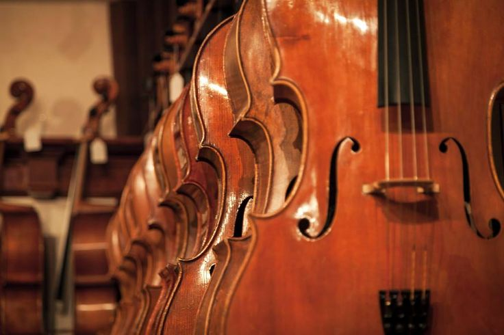 We have some really great fine #cellos in our studio for trial and purchase. #cellists #violinshop #violinmaker See our catalog: http://www.benningviolins.com/Benning-Catalog-Cellos-for-sale.html