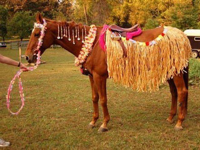 Aloha horse! Love the lei - bridle/reins!