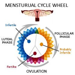 how to find out when your ovulating with irregular periods