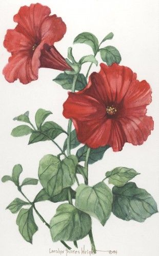 Petunias watercolor $80.00