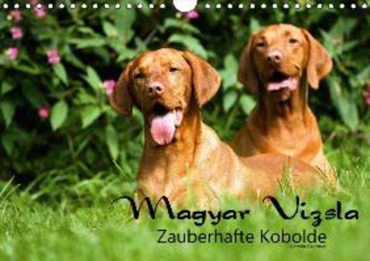 Magyar Vizsla - Zauberhafte Kobolde (Wandkalender 2017 DIN A4 quer)