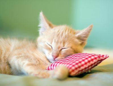 Natürlich könnt ihr auch ein Kissen für eure Katze gestalten! Die liegen auch gerne weich ;-)