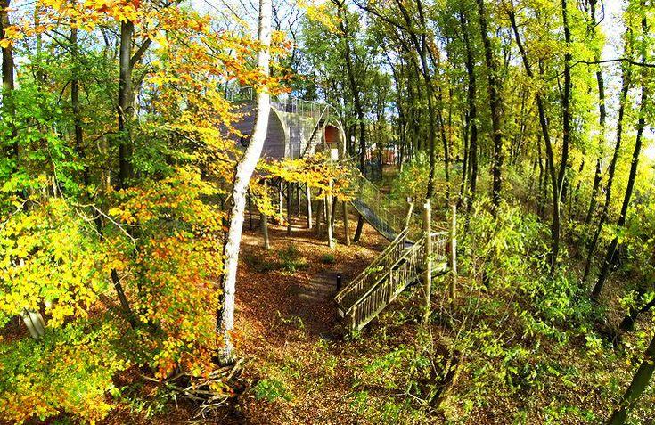 Slapen tussen de wolven doe je in deze unieke boomhuttenin Dörverder, Duitsland? ❤️Boek nu deze bijzondereglamping accommodatie met panorama uitzicht.