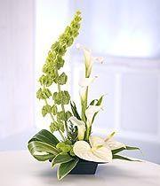 A modern tall arrangement featuring white Calla Lilies, white Anthurium, bells of Ireland and Chrysanthemums