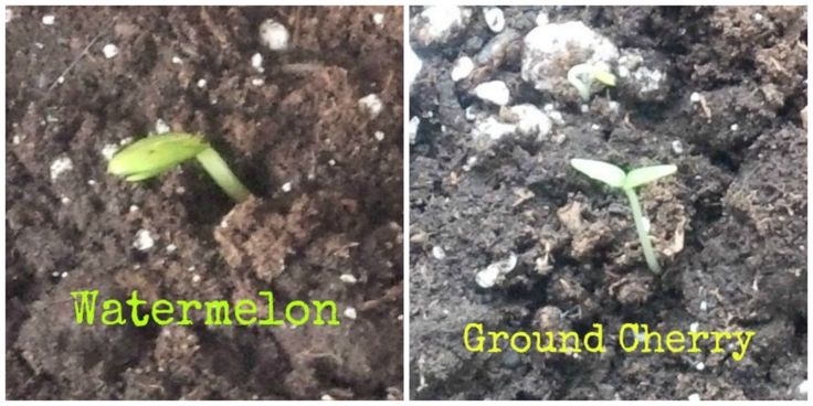 Adventures in Vegetable Gardening | Ottawa Mommy Club - Moms and Kids Online Magazine | By Tracy Noble